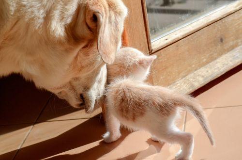 Draugystė,šuniukas,susitikimas