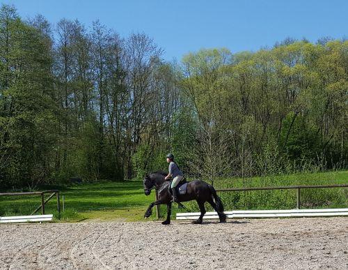 friese,arkliukas,šokti,jodinėjimas,rap,arklys
