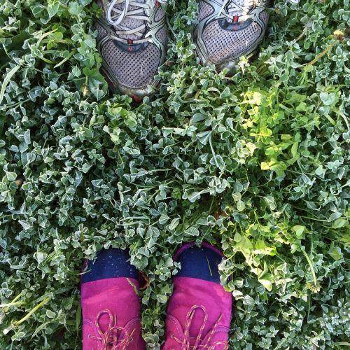 šaltis,žiema,šaltas,gamta,sezonas,galinis kiemas,sodas,žalias,žolė,natūralus,kiemas,lauke,pėdos,šeima,veja,žmonės,šeimos lauke