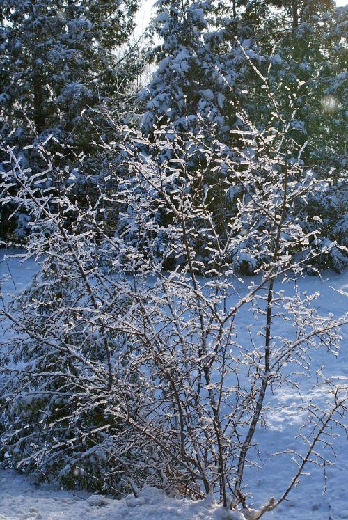 šaltis,žiema,ledas,šaltas oras,tvora,laukas,aplinka,šaltas,sniegas,krūmas,medis