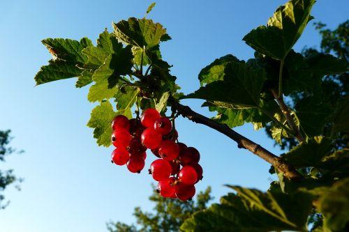 vaisiai,gamta,lakštas