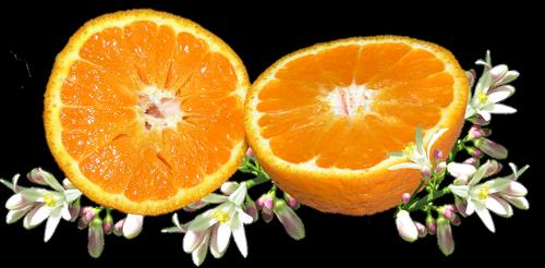 vaisių, oranžinė, žiedas, citrusinių, maisto, vitamino, organinis