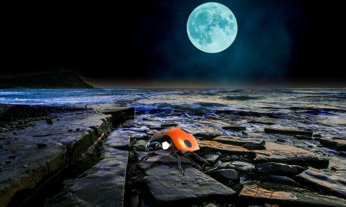 pilnatis,kranto,naktis,vabalas,banga,uolos,begalybė,niūrus,naršyti,palikti,nuotaika,mėnulio šviesa,mėnulis,perspektyva,montavimas,Boružė,Boružė,takelius