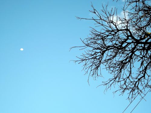 mėnulis, filialai, medis, sausas, dangus, filialai, natiurmortas