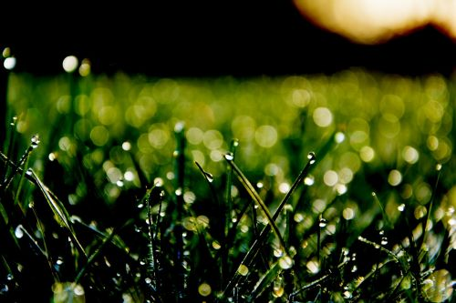 žaislinė žolė,žalias,Bokeh,ryto saulė,pieva,žolė,žolės,gamta,žole pieva,minkštas,lašas vandens,žalia žolė,Uždaryti,neryškus,rasa,Morgentau,rasos rasos,pavasaris,makro,lašelinė,sodas