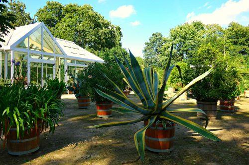 sodas,oranžerija,šiltnamyje,konservatorija,šiltnamio,sodininkystė,augalai,vazoniniai augalai,kubilai,augalai voniose