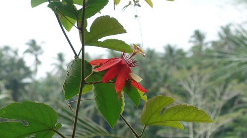 sodas,atsitiktinai,gėlė
