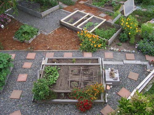 sodas,miesto ūkininkavimas,ekologiškas,sodininkystė,daržovių,galinis kiemas,augalas,miesto,ūkininkavimas,Žemdirbystė
