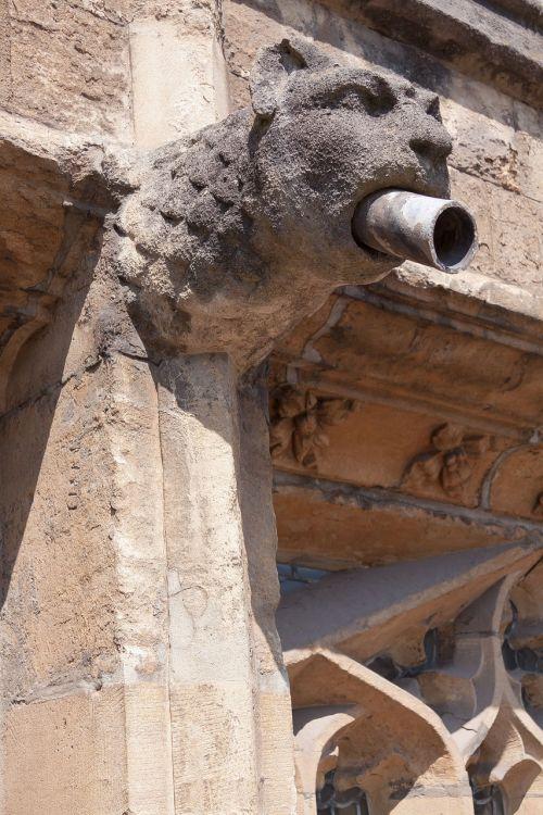 gargoyle,liūtas,gyvūnų galvą,pėdos,gotika,mitinės būtybės,drenažas,akmuo,liūto galvą,architektūra,figūra,nerija,galva,pastatas