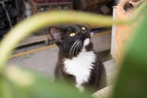 gato,naminis gyvūnėlis,gyvūnas,kačiukas,mielas,kačių,kačiukas,mielas,vidaus,katė