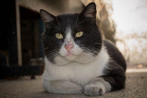 gato,gyvūnas,naminis gyvūnėlis,katė,kačiukas,kačių,kačiukas,Miau,mielas,mielas