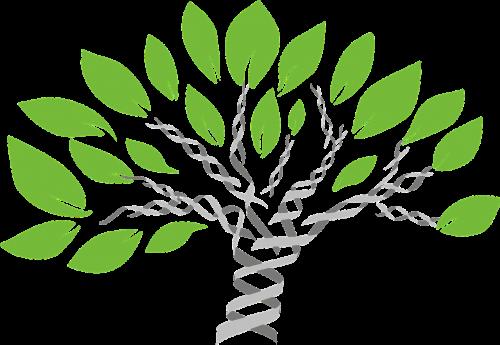genų medis,gyvybės medis,evoliucija,lyginamoji biologija,dna,medis,taksonomija,evoliucinis medis,nemokama vektorinė grafika
