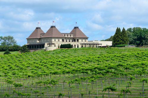 vynuogynas, vyno fabrikas, vynas, vynuogės, kraštovaizdis, vynmedis, lauke, Gruzija, vynas & nbsp, šalis, Žemdirbystė, alkoholis, vaisiai, industrija, verslas, Džordžijos vyno darykla