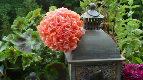 balkonas,geranium,gėlės,vėjo šviesa,žibintai,lempos,rožinis,lašiša rožinė,žalias,natiurmortas,įspūdis,apdaila,dekoratyvinis,deko,dekoruoti,nemokamai,vasara,vasaros idilija,idilija,idiliškas,gražus,nuotaika,gamta,į sveikatą,grožis