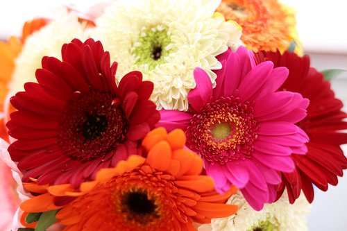 Gerbera, Daisy, Gerbera gėlių, puokštė gerbera, gėlė, augalų, Žiedlapis, pobūdį, puokštė