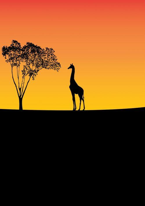 žirafa,laukinė gamta,medis,gamta,gyvūnas,laukiniai,afrika,išsaugojimas,juoda,geltona,oranžinė,valgymas,lapai,skaitmeninis menas,menas,silueto menas,siluetas,vektorinis menas,vektorius,yatheesh menas,vienas,photoshop menas,Photoshop,iliustratorius,kaklas,rezervas,dizainas,minimalistinis menas,minimalistinis,iliustratoriaus menas