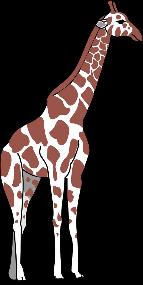 žirafa,ruda,balta,dėmės,ilgai,kaklas,gyvūnas,nemokama vektorinė grafika