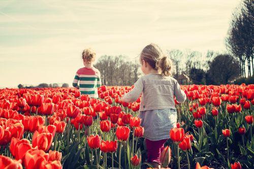 mergaitės,vaikai,tulpės,Nyderlandai,pavasaris,gamta,tulpė,gėlė,holland,žydėti,augalai,tulpių laukai,gėlės,raudona,lemputė,saulė,oranžinė,mėlynas dangus,augalas,sodas,spalva,žiedas,mėlynas,turizmas,Nyderlandų lemputė,tulpių laukas,seserys,žalias,vasara