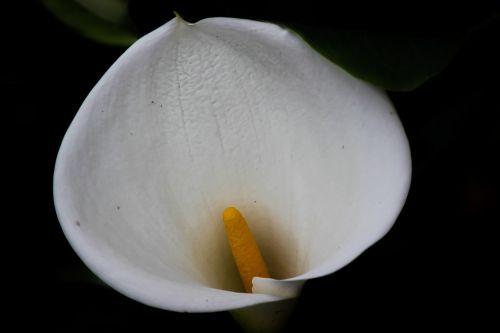 stiklinė pieno,gėlė,gamta,sodas,gėlės,pavasaris,augalas,gėlių sodas,balta,floras,trapi,tropinės gėlės