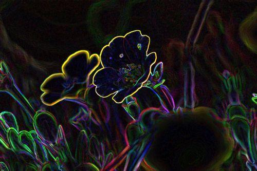 žėrintis & nbsp, kraštai & nbsp, gėlės, Photoshop, žėrintis, gėlės, grafika, menai, žėrintis kraštų gėlės