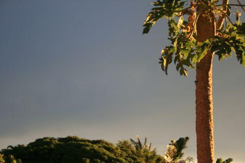 saulėlydis, saulės šviesa, žėrintis, medis, Paw & nbsp, Paw, žėrintis saulė ant lapinės medžio
