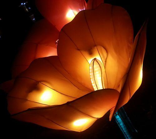 žėrintis, japanese, žibintas, gėlė, tulpė, šviesa, apšviesti, žėrintis tulpių japonų žibintas