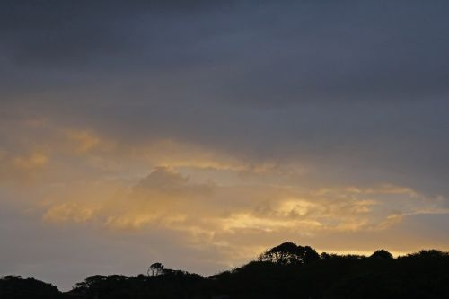 dangus, saulėlydis, švytėjimas, auksinis, oranžinė, medžiai, juoda, siluetas, aukso tonuotas saulėlydis