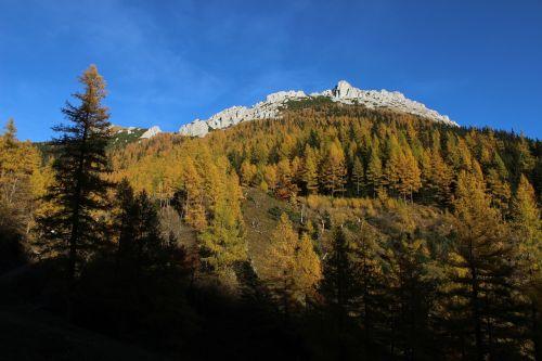 aukso ruduo,kalnai,miškas,mėlynas,dangus,ruduo,austria