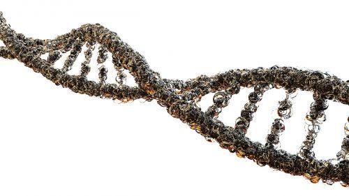 podagra,biologija,DNR grandinė,mokslas,genetika,rūgšties deoksyrybonukleinowy,molekulinė biologija,gyvenimas,genai,vyras