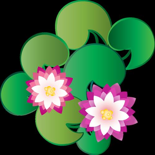 grafinis, Lotus, Kašmyras, gėlė, vandens, Dal ežeras, nageen ežeras, ežeras, Srinagar, žydi, žiedas, Nemokama vektorinė grafika, Nemokama iliustracijos