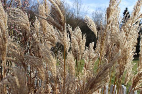 žolė,gamta,kraštovaizdis,žolės,pieva,augalas,Uždaryti,žaislinė žolė,vėjas
