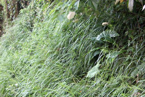 žalia žolė, žolė, žalias, augalai, lapai, sodas, tapetai, fonas, žolė