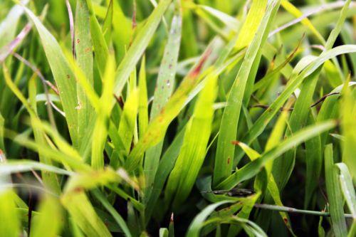 žalia žolė, žolė, žalias, augalai, lapai, sodas, tapetai, fonas, žolė 2