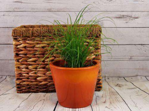 žolė,vandens hiacintas,krepšelis,augalas,natūralus produktas