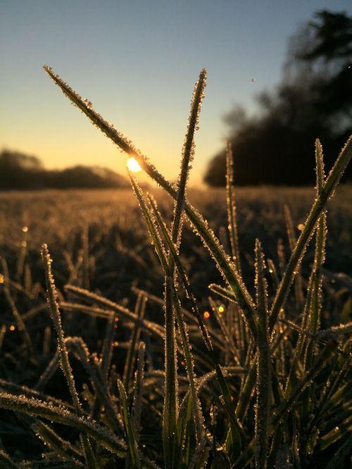 žolė,Uždaryti,žolės,gamta,saulėtekis,ankstyvas brandinimas,šaltas,ledas,žaislinė žolė,kraštovaizdis