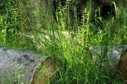 žolė,gamta,žalias,žolės,augalas,žolės mentė,kraštovaizdis,Nebaigtas,žalia žolė,Uždaryti,aukšta žolė,žaislinė žolė