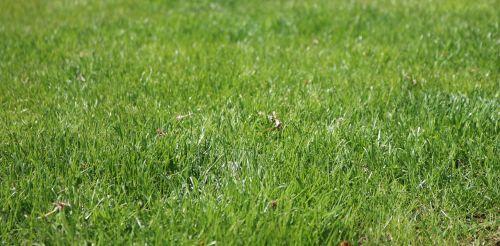 žolė,žalias,pieva,gamta,žalia žolė,žole pieva,augalas,žaislinė žolė,vasara