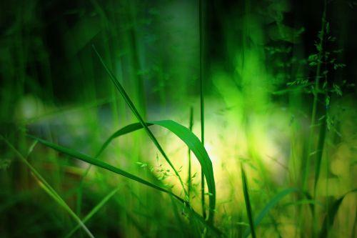 žolė,gamta,žolės,žalias,žolės mentė,augalas,Uždaryti,žalia žolė,Nebaigtas,aukšta žolė,šviesa