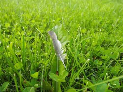 žolė,rašiklis,plumetė
