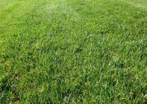 žolė,žalias,lauke,lauke,lauke,fonas,Iš arti,makro,tekstūruotos,mentės,pjauti,tręšti,veja,auga,tapetai,stalinis kompiuteris