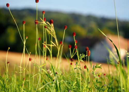 žolė,žolės,žolės mentė,gamta,žalias,augalas,žaislinė žolė,pieva,kraštovaizdis,žalia žolė,spiglys,Nebaigtas,žole pieva,aukšta žolė,laukinė žolė
