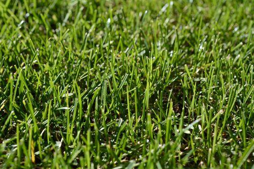 žolė,žalias,skubėti,gamta,žolės,žalia žolė,augalas,Uždaryti,žole pieva,vasara,žolės mentė,Nebaigtas,kraštovaizdis,frisch