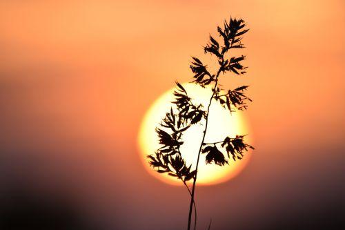 žolė,saulė,makro,švytėjimas,gamta,pieva,vasara,kraštovaizdis,vakaruose,saulėlydis,Iš arti,gamtos grožis,grožis,dangus,vakaras
