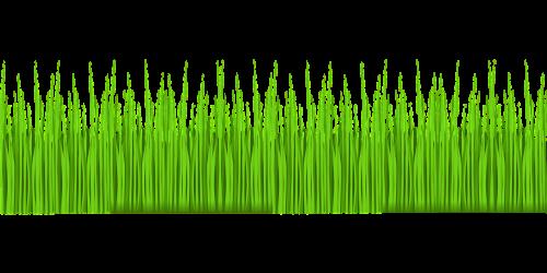 žolė,žalias,veja,sodas,gamta,vasara,pavasaris,augalas,sodininkystė,laukas,pieva,kiemas,aplinka,parkas,nemokama vektorinė grafika