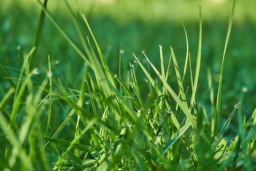 žolė, peiliai žolės, lašelinė, meadow, morgentau, Iš arti, rasa, laisvos, natūralus, augalų, augimas, lapų, pobūdį, žalias, Sodas, lietaus lašas, ant žemės, dėl lapų, lapai, rasos lašas, lašas vandens, fonas, šlapias, atšildykite, šviežias, žolės, Žaidimas žolė, žalia žolė, žolė pieva, pavasaris, kraštovaizdis, drėgmė
