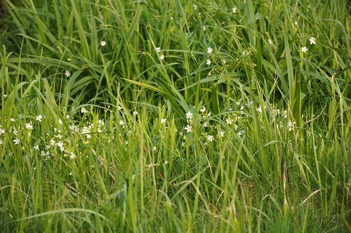 žolė, Žalieji, pobūdį, gėlės, Sodas, augalai, vasara, laukas, meadow, ūgliai, pavasarį žolė, žalia žolė, žolė pavasarį