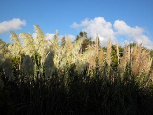 žolė,gamta,laukas,lauke,natūralus,kraštovaizdis,augimas,lauke,vasara