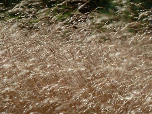 žolė,žolės,Heide,gamta,žaislinė žolė,gerai,filigranas,augalas,vėjas