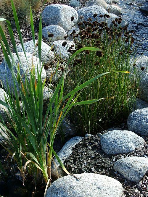 žolė,akmenys,dekoratyvinė žolė,vanduo,žalias,ruda,balta,mėlynas,srautas,meditacija,gamta,ramus