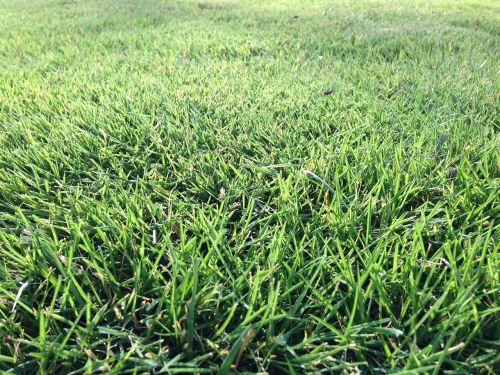 žolė,laukas,futbolas,veja,žalias,gamta,natūralus,pieva,žolės laukas,velėna,Sportas,augalas,futbolo aikštelė,kiemas,saulė,augimas,amerikietiškas futbolo laukas,žalia žolė,lengvoji atletika,žalias laukas,tekstūra